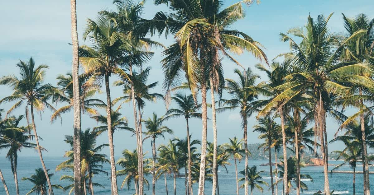 coconut meat benefits