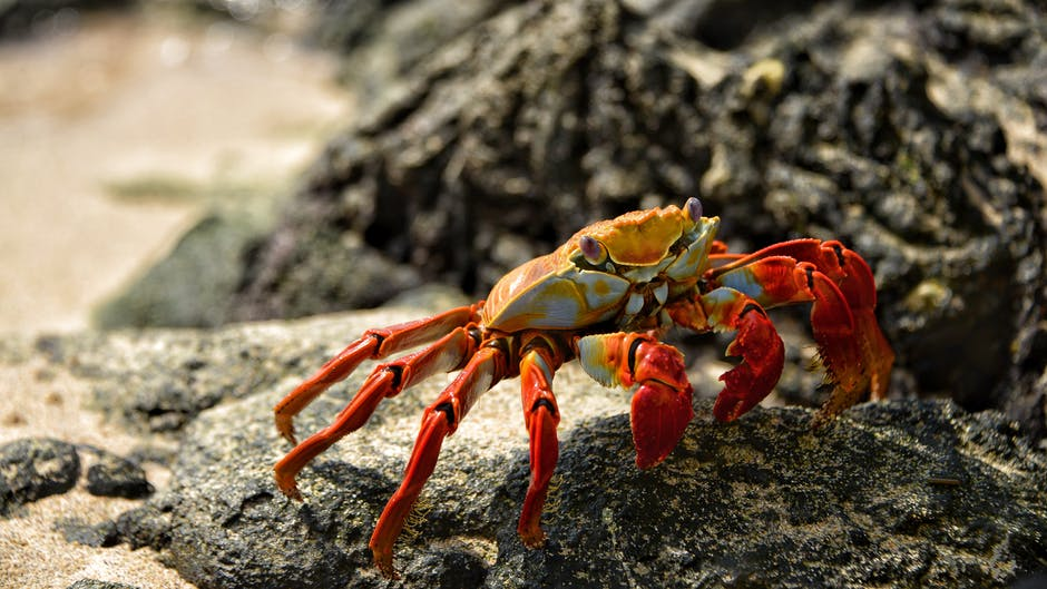 A crab on a rock