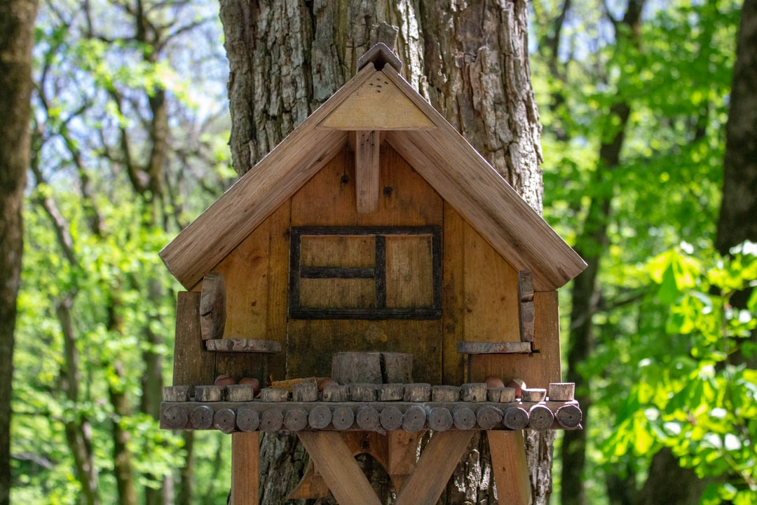 A birdhouse in a forest